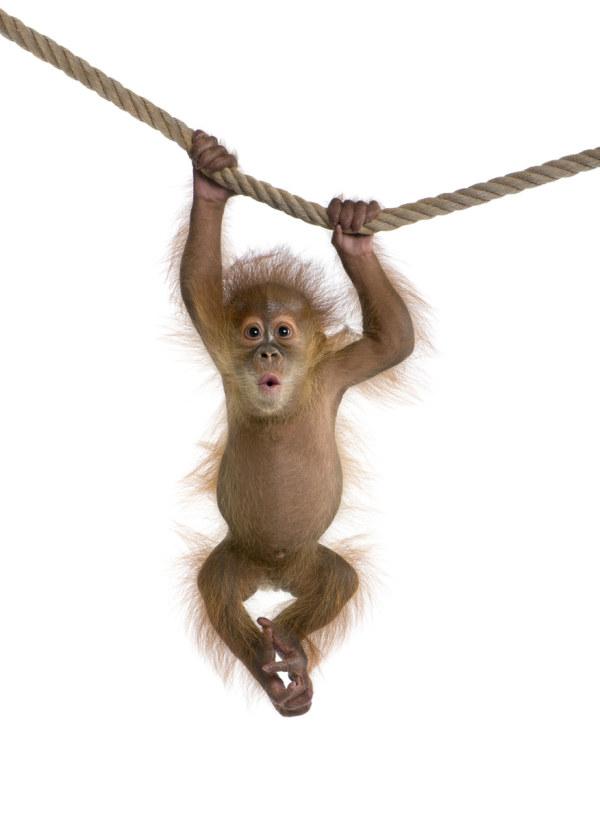 可爱的猴子图片-素彩图片大全