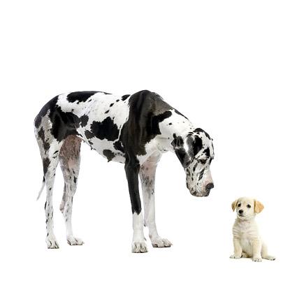可爱的小狗与大狗图片-素彩图片大全