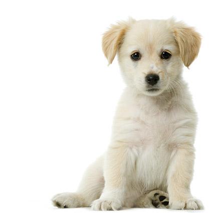 可爱的小狗写真图片7-素彩图片大全