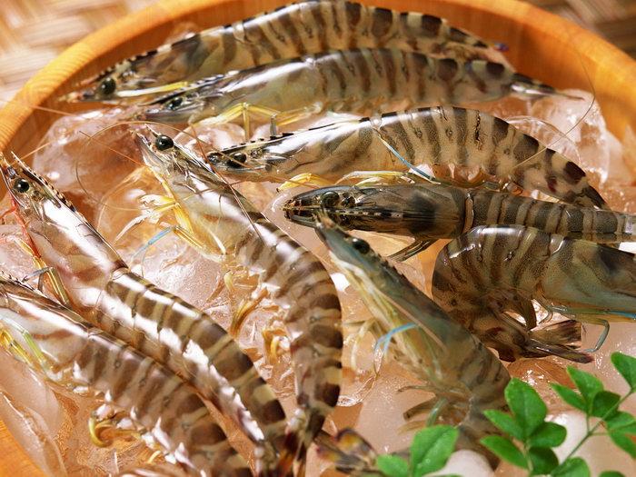 海虾图片-素彩图片大全