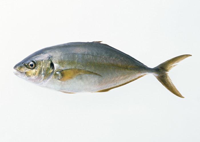 鱼图片-素彩图片大全