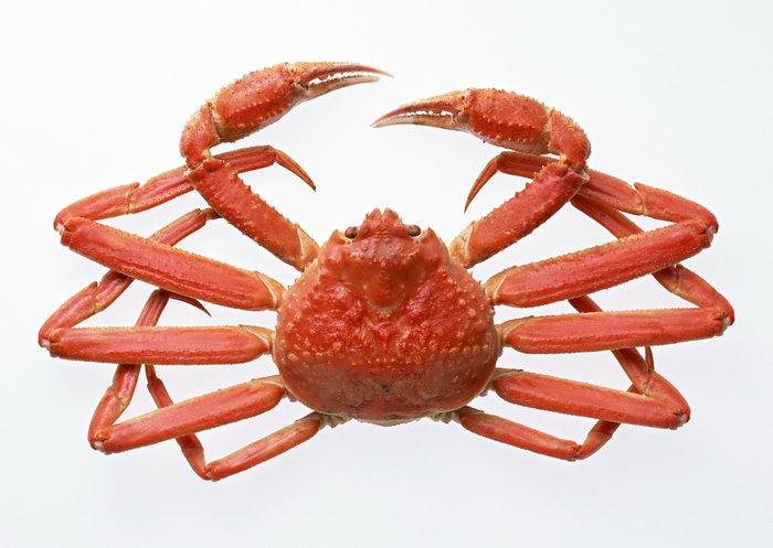 螃蟹图片-素彩图片大全