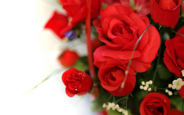 玫瑰花与美女图片