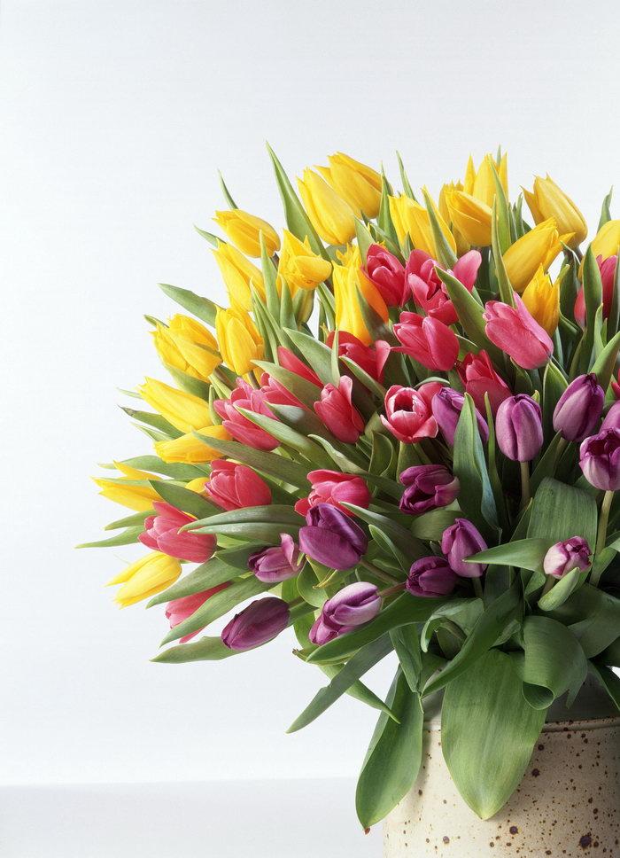 郁金香花束图片-素彩图片大全