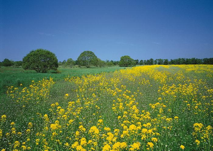 大片野菊花图片,大片野菊花,自然美景,风景,2950x2094像素
