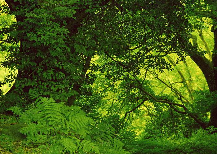 春天树林图片