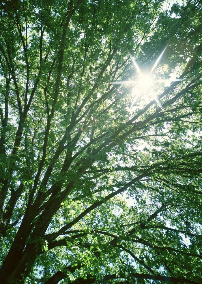 绿色森林图片-素彩图片大全