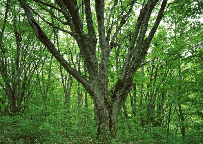 绿色森林图片,绿色森林,树林,植物,摄影,2094x2950像素