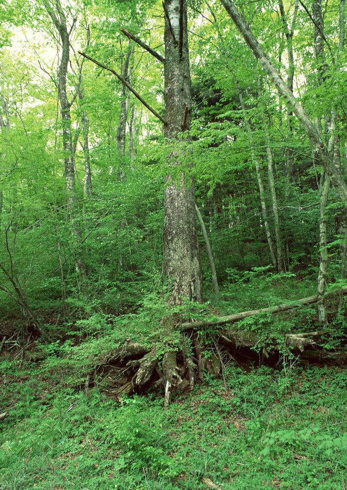 森林图片,森林,树林,植物,摄影,2094x2950像素