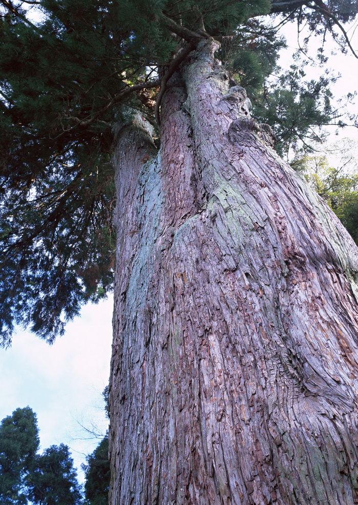 树木图片-素彩图片大全