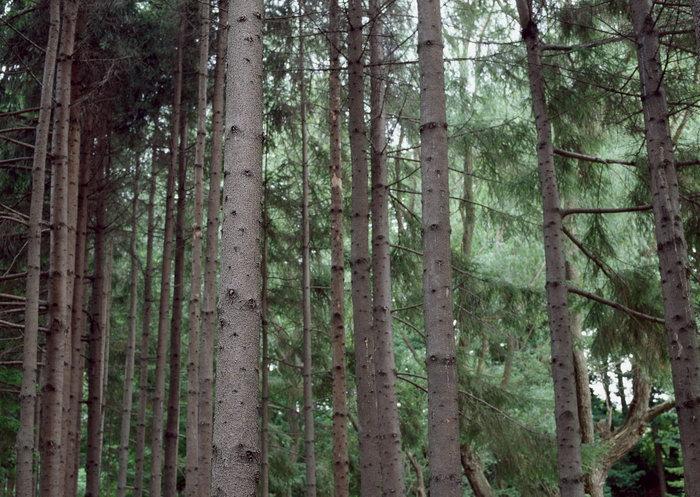 森林风景图片-素彩图片大全