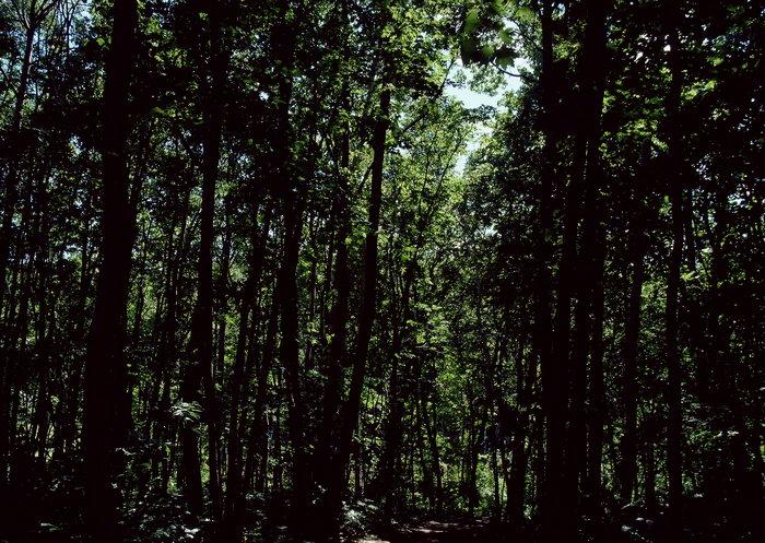 森林图片,森林,旅游风景,树木,树林,森林,四季风景,风景,2094x2950