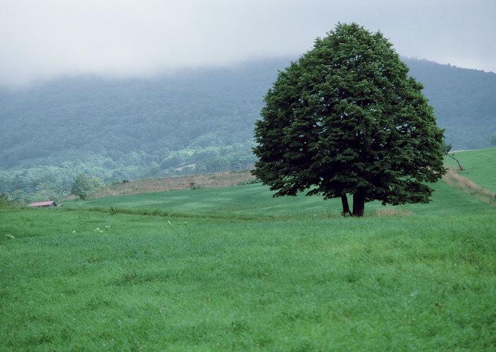草原树木图片,草原树木,旅游风景,树木,树林,森林,四季风景,风景,2094