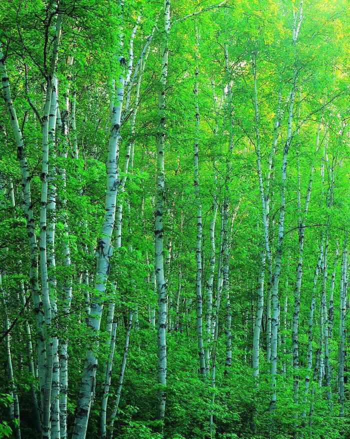 大自然风景森林图片-素彩图片大全