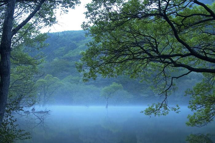 树木水中倒影美景图片