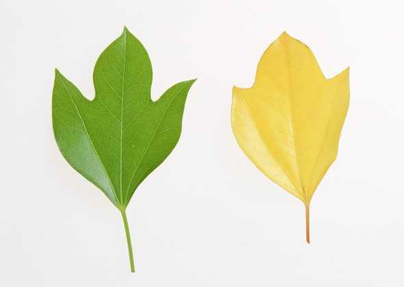 花草特写图片,花草图片,树叶图片,花草,特写,树叶