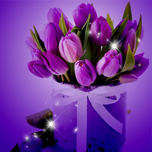 紫色郁金香图片-素彩图片大全