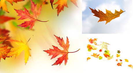 飘落的枫叶图片,飘落,枫叶,树叶,秋天,秋季,秋叶,秋季,树叶,秋叶,秋天图片