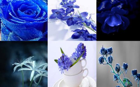 蓝色植物花卉图片