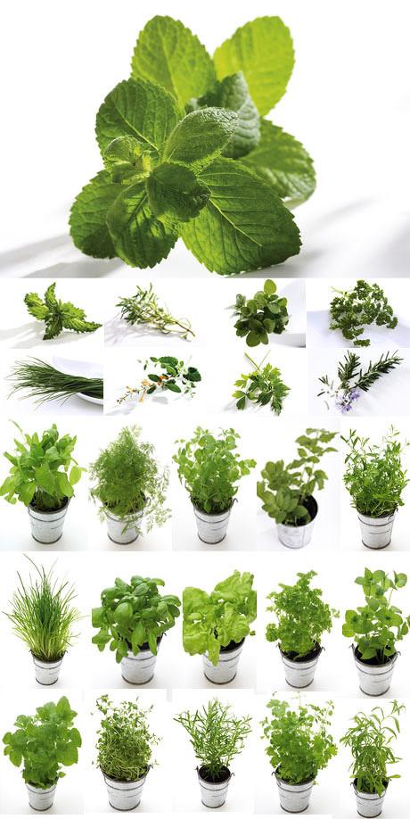 花盆,叶子,绿色,环保,花盆,盆栽植物,绿色,盆栽,植物,叶子,绿叶,盘景