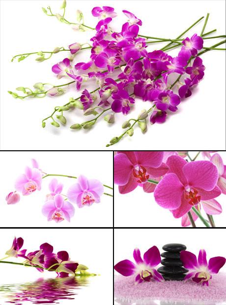 鲜艳的蝴蝶花图片-素彩图片大全