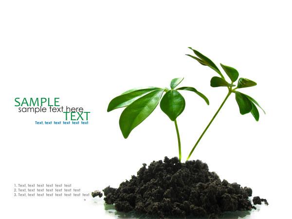 呵护植物图片,树苗,泥土,植物,植物,生长,呵护