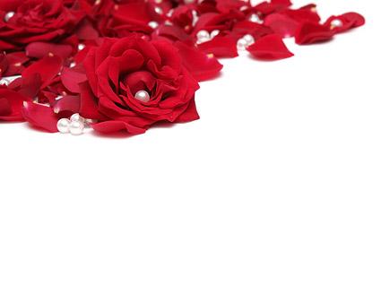 红色玫瑰花瓣珍珠图片