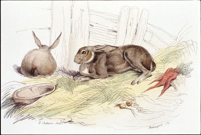 手绘兔子图片-素彩图片大全
