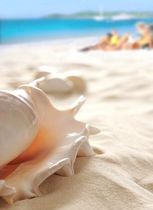 沙滩上的海螺图片-素彩图片大全
