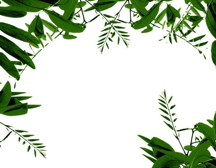 植物边框图片-素彩图片大全