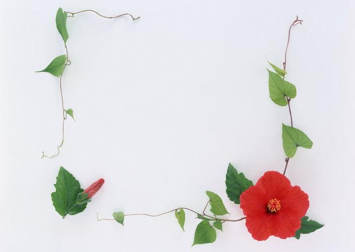 黑板报手绘花朵边框