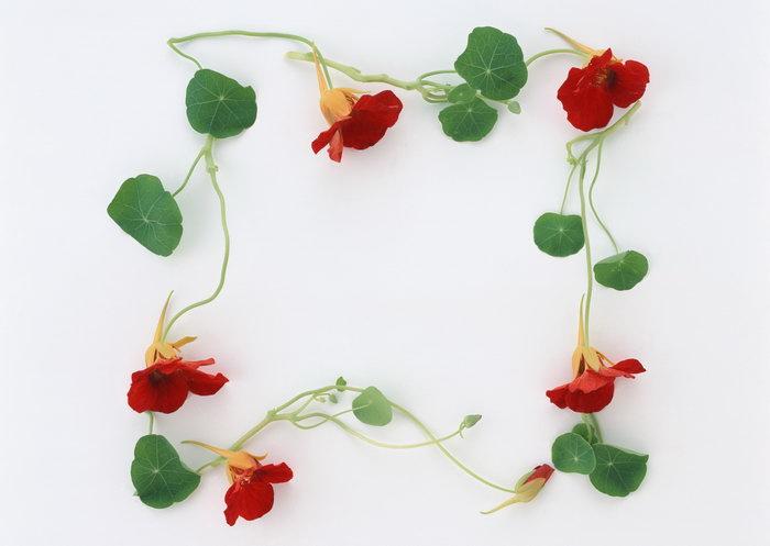 绿色植物,边框图片,绿色植物,边框,植物,边框,摄影,手抄报边框,2094x