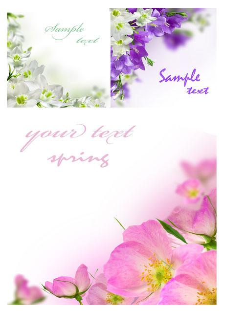 3款淡雅清新花朵图片