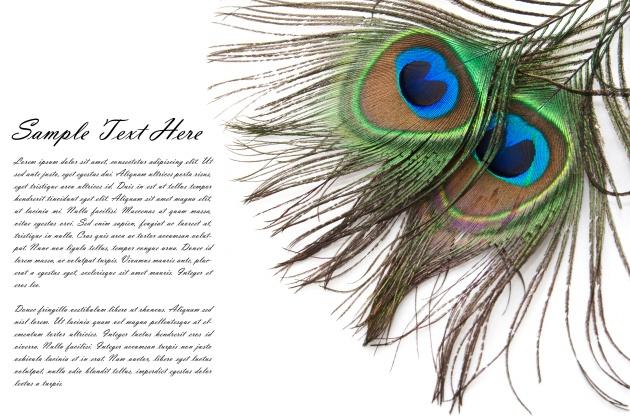 羽毛卡片图片,其他图片,创意设计图片,羽毛卡片,贺卡,孔雀羽毛,摄影