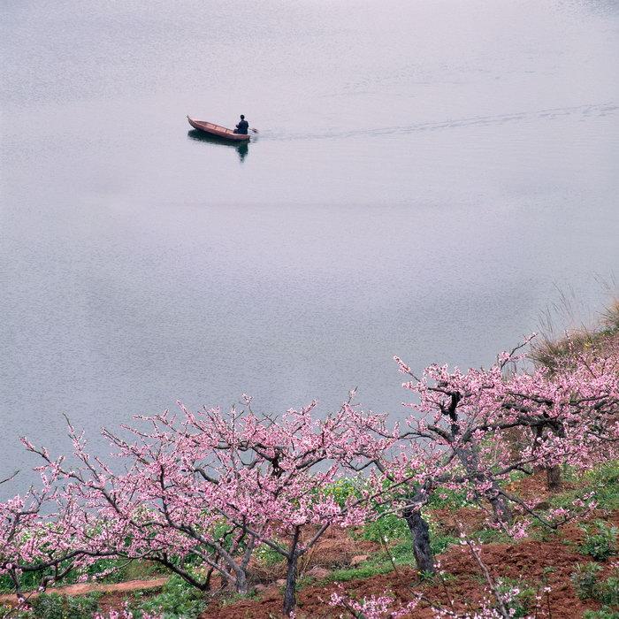 湖面风景图片,湖面风景,桃花,桃树,自然风景,风景,3780x3780像素