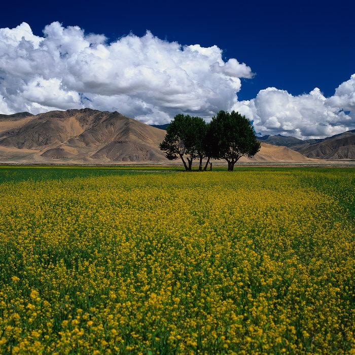 田野图片,田野风景,山川,自然风景,风景,3780x3780像素