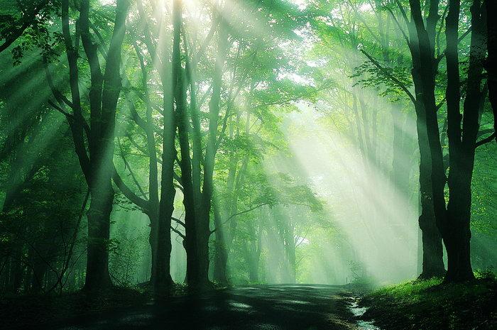 穿过树林的阳光图片-素彩图片大全