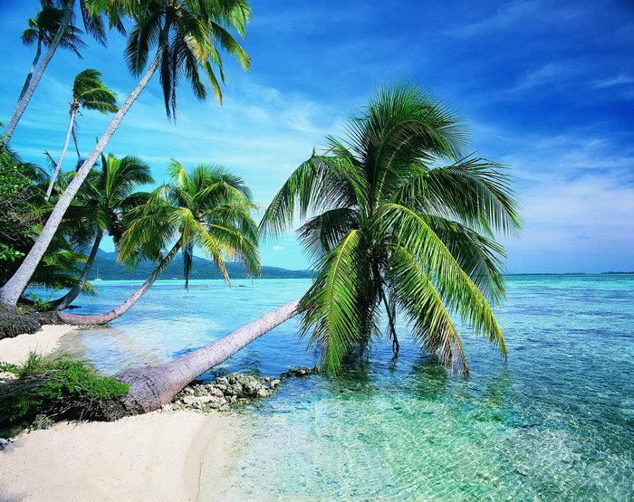 海边椰树风景图片-素彩图片大全