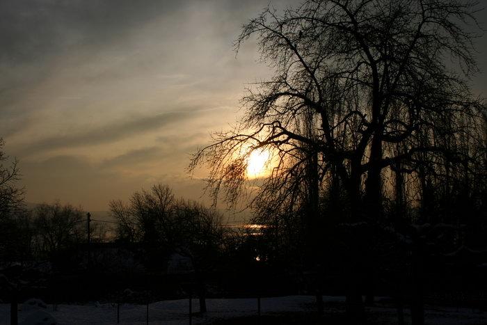 夕阳柳树图片,夕阳,柳树自然美景,风景,3456x2304像素