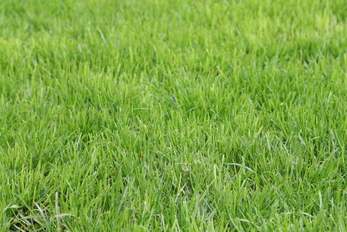 杂草图片,杂草,自然风景,摄影,山水景观,3456x2304像素