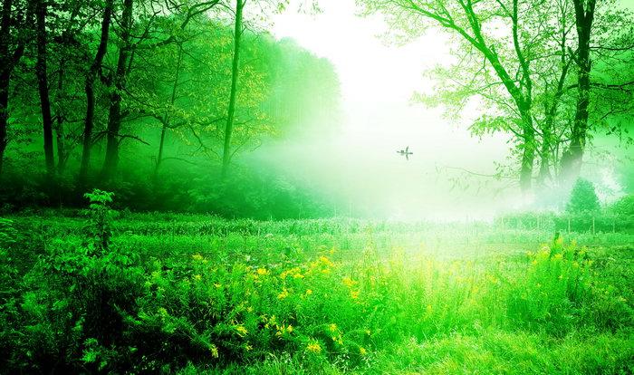 绿色大自然图片,绿色大自然,自然风景,摄影,山水景观,5409x3196像素
