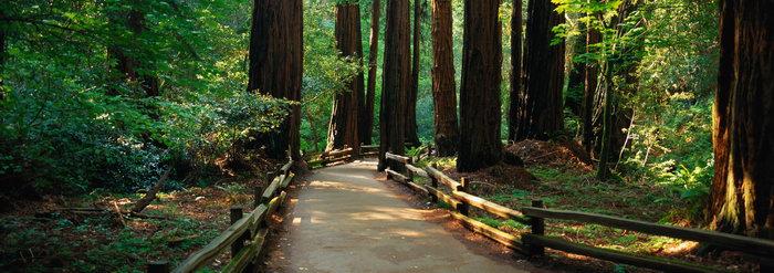 森林小路图片,森林小路,自然风景,巨幅自然景观,风景,5312x1874像素