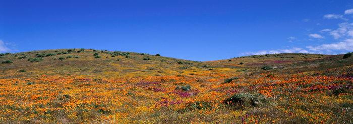花草图片,花草,自然风景,巨幅自然景观,风景,5312x1874像素