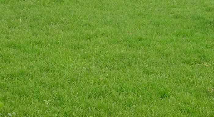 足球场草地图片,足球场草地,自然风景,摄影,山水景观,1500x824像素
