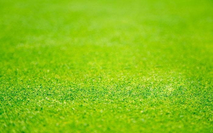 足球场草地图片-素彩图片大全