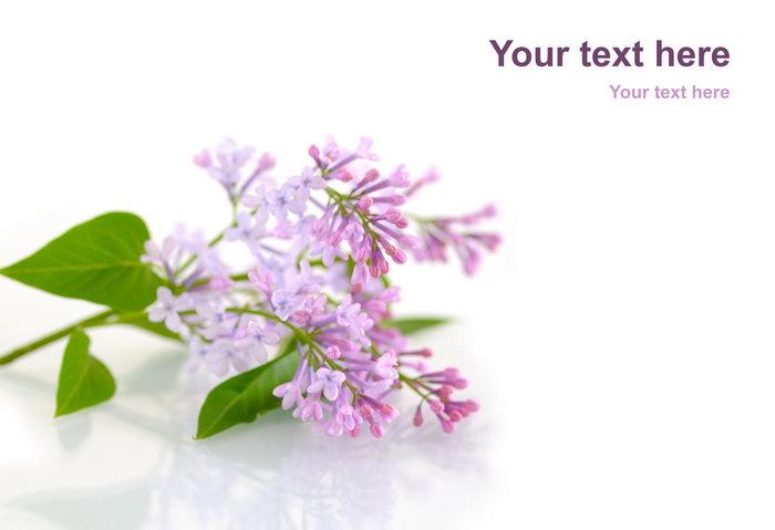 一枝花图片