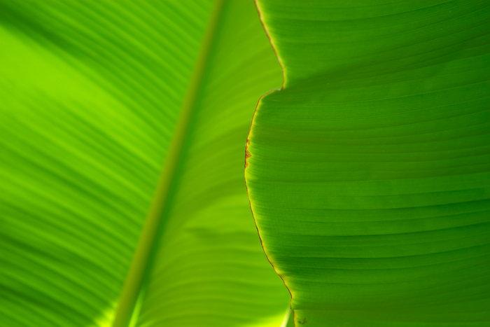 叶子纹理图片,绿色叶子,花草树木,摄影,植物,6152x4104像素