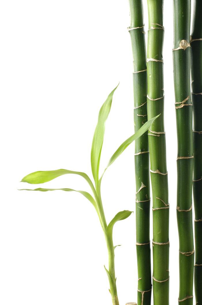 竹子图片-素彩图片大全