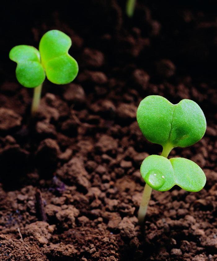幼苗图片,幼苗,生命力量,花草树木,摄影,植物,4672x3966像素