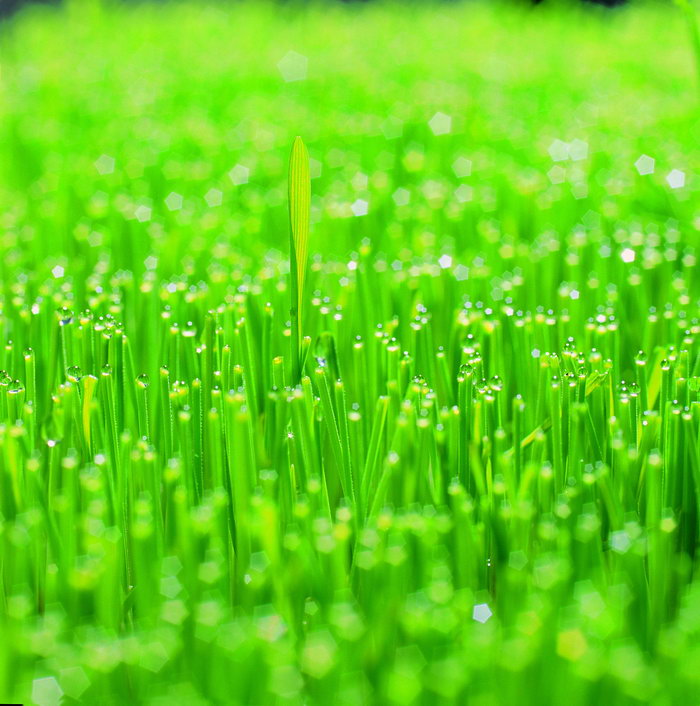 植物,幼苗图片,植物,幼苗,生命力量,花草树木,摄影,植物,4672x3966